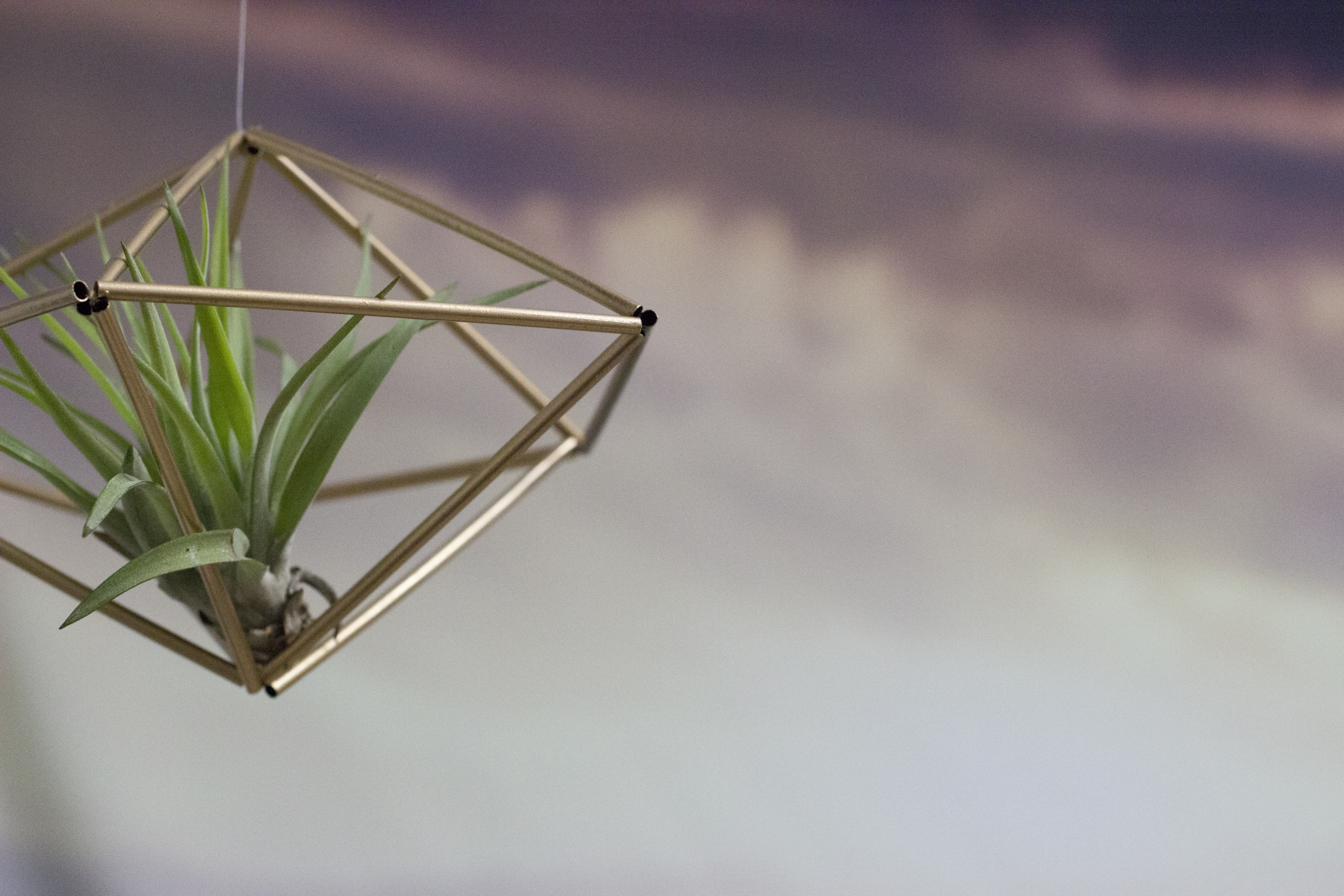 Diy Hanging Air Plant Terrariums Indie Co